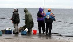 Marea Neagră revine la viaţă. Specii dispărute de peşti repopulează marea