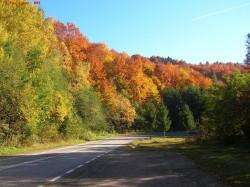 Perdele forestiere pe drumurile din Maramures