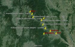 RISE Project: Ce se ascunde in spatele celei mai mari afaceri cu paduri din Romania
