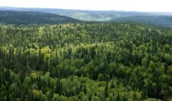 Varga: Ma voi lupta in Parlament pentru aprobarea Codului silvic in forma initiata de Guvern