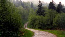 Ampla actiune a politistilor clujeni pentru protectia fondului forestier