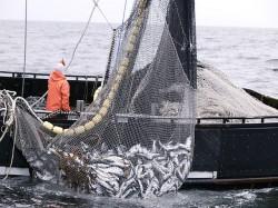 Comisar UE: Pescuitul ilegal reprezinta in continuare o problema in Marea Neagra