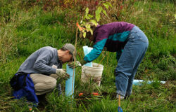Campanie de plantare de arbori in municipiul Falticeni