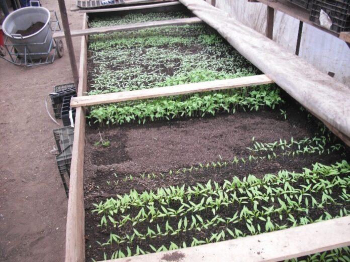 Gunoiul de grajd - solutia eco de incalzire a rasadnitelor