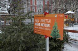 Viena: Brazi de Craciun utilizati in scopuri ecologice