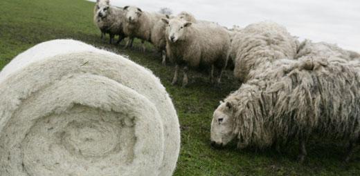 Izola?ie ecologic? din lana de oaie pentru termoizolarea blocurilor din Cluj