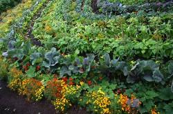 Ferma Familiala Bio, baza dezvoltarii rurale durabile