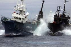 Nava cu activisti lovita intentionat de un pescador japonez