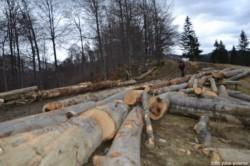 Dezastru ecologic in zona Muntele Mic