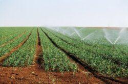 Stimularea absorbtiei elementelor nutritive din sol