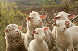 Colaborare intre ANSVSA si MAI pentru a asigura protectia si bunastarea animalelor