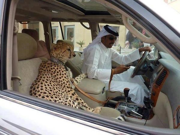 Autorit??ile arabe vor s? interzic? s?racilor s? mai de?in? ma?ini