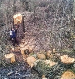 """O amenda de 3000 de lei nu va aduce inapoi arborii taiati """"legal"""" de pe cursul raului Nera"""