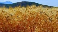 Specialistii estimeaza necesitatea dublarii productiei de cereale in urmatorii ani