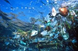 Incepe competitia filmelor eco despre problema deseurilor marine