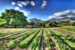 Ce inseamna de fapt alimente ecologice
