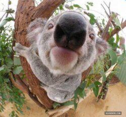 De ce este fauna Australiei unica?