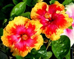 10 plante care adora sa stea inflorite