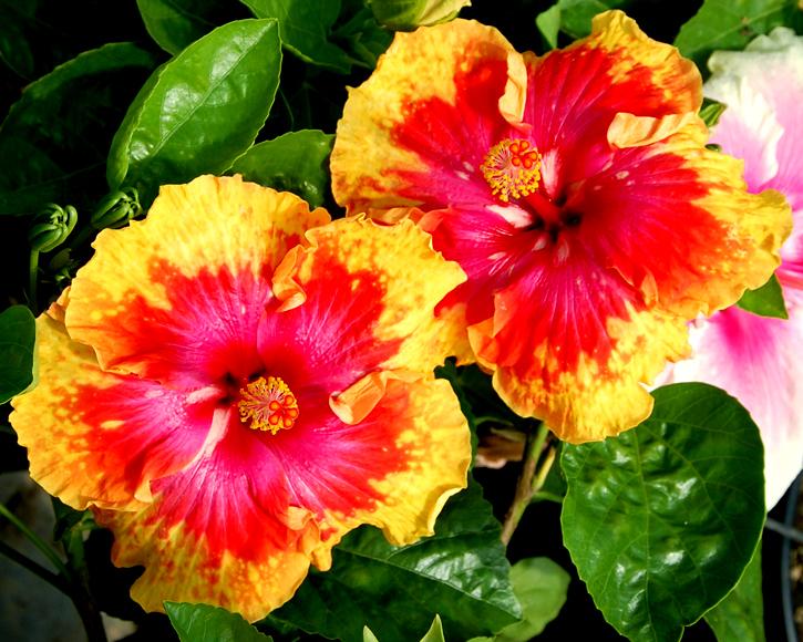 10 plante care ador? s? stea inflorite