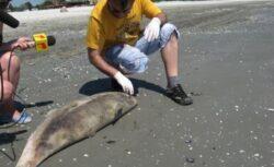 22 de ani cu Oceanic Club – Printre pesti si delfini !