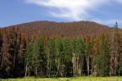 Modalitatile de sustinere si finantare a padurilor din Romania