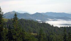In ultimul deceniu, suprafata fondului forestier sucevean s-a redus cu 17%