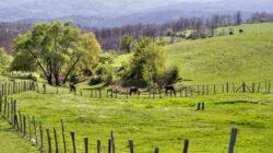 Bulgaria: Mii de oameni aSolutii pentru a compensa proprietarii de terenuri aflate in situri NATURA 2000au protestat pentru salvarea unui parc natural