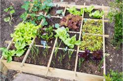 Sfaturi verzi pentru economii