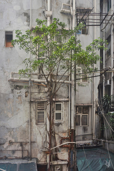plante-beton-hong-kong