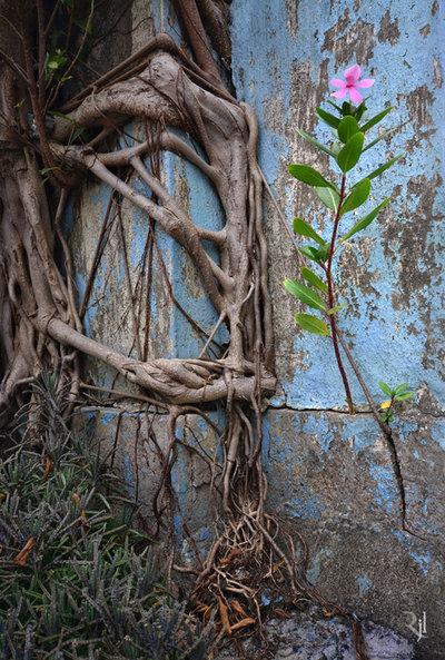 plante-crescute-beton