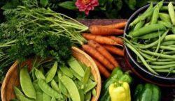 Piata mondiala a produselor ecologice va inregistra o crestere de 15,7 la suta in urmatorii sase ani