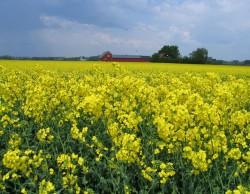 Nicolai: Romania are potentialul de a deveni lider in producerea de combustibil bio