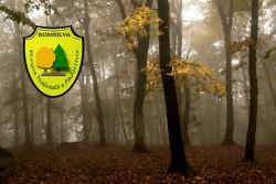 Romsilva produce anual peste 80 de milioane de puieti forestieri, in pepinierele proprii