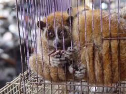 Marea Britanie anunta toleranta zero fata de comertul cu animale salbatice