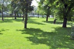 Primaria Arad face investitii de 7,5 milioane de lei in spatiile verzi