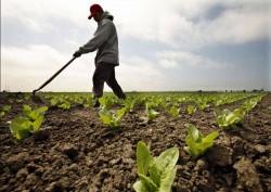 Agricultura ecologica: Speram sa ii ajungem din urma pe nemti si pe austrieci