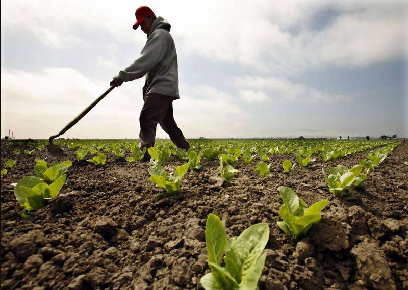 Agricultur? ecologic?: 6 - 7 mil. euro pentru 15.000 de fermieri