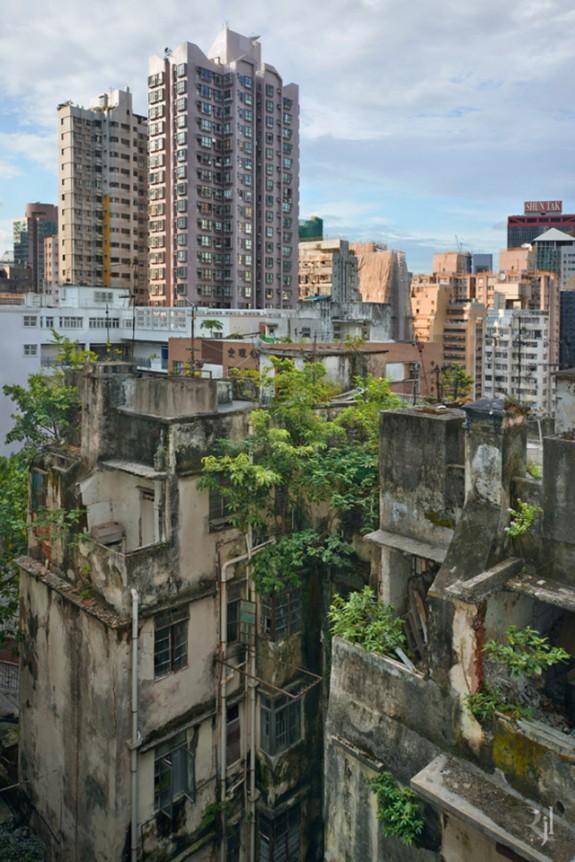 Lumea incredibila a naturii care creste in beton