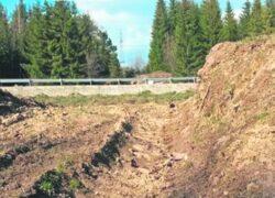 Poiana de la Garana, distrusa de ucigasii padurilor