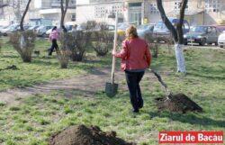 """Bunicii de la Clubul """"60 plus"""" au demarat o campanie de plantare de pomi in Bacau"""