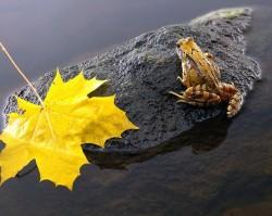 Beneficiul broastelor si soparlelor in permacultura