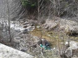 Actiune de ecologizare in Cheile Runcului