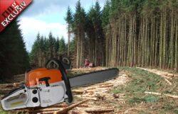Greenpeace si Bankwatch au reusit sa stopeze defrisarea a 59 hectare de padure in Gorj