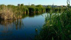 Delta Vacaresti devine arie naturala protejata. A fost inaugurat un punct de observatie a zonei