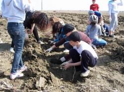 Actiune de ecologizare si plantare in parcul din zona Lamaita