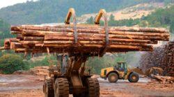 ECONOMIE » NEWS Doina Pana:implementarea unui sistem de supraveghere a traseului lemnului ar putea reduce hotia