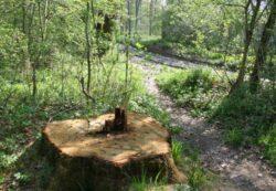 Primariile nu vor mai putea taia niciun copac fara aprobare de la Protectia Mediului