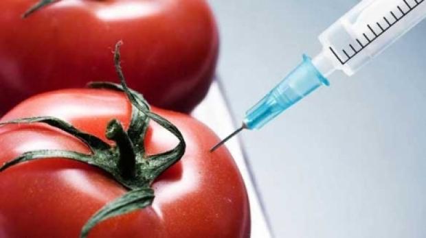 Isteria OMG-urilor – avem motive să ne temem de organismele modificate genetic?