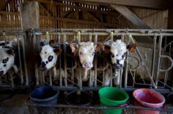 """Comisia Europeană anunţă operaţiunea """"Să facem agricultura mai eco""""."""