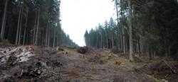 Jaf intr-o padure din Valcea. 80 de hectare de padure au disparut